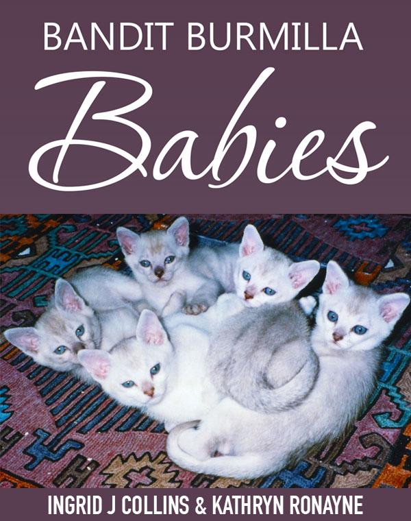 kathryn_ronayne_bandit_burmilla_babies_BOOK
